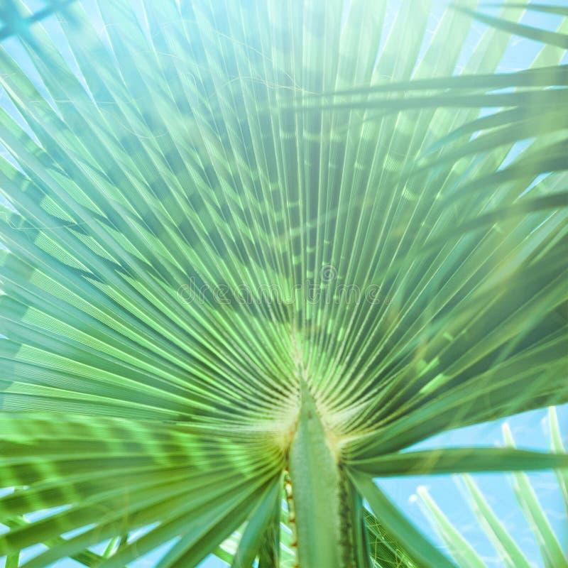 Beaut? des tropiques photographie stock libre de droits
