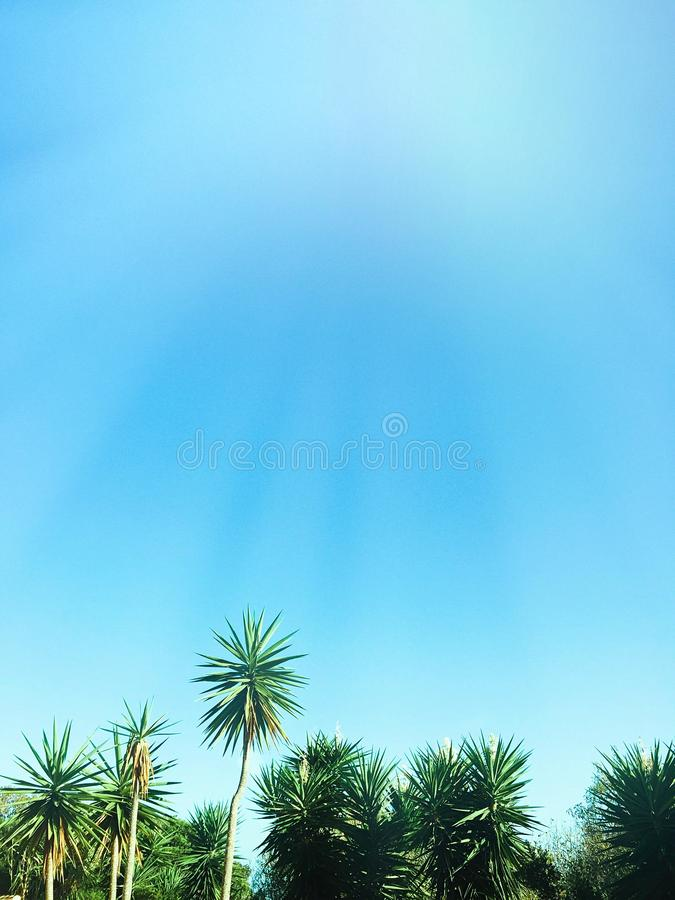 Beaut? des tropiques image libre de droits