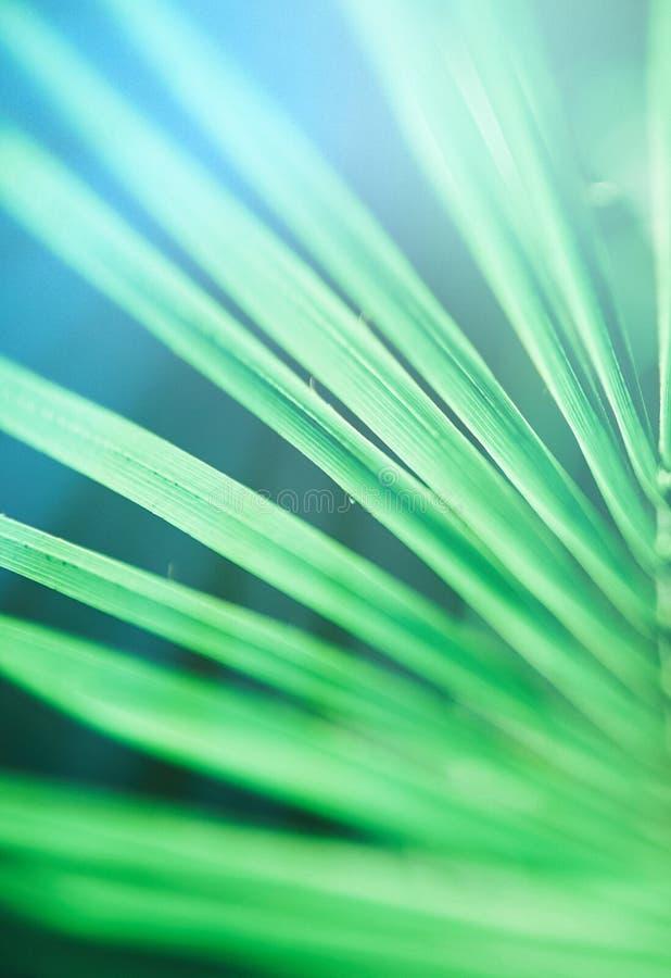 Beaut? des tropiques photos libres de droits