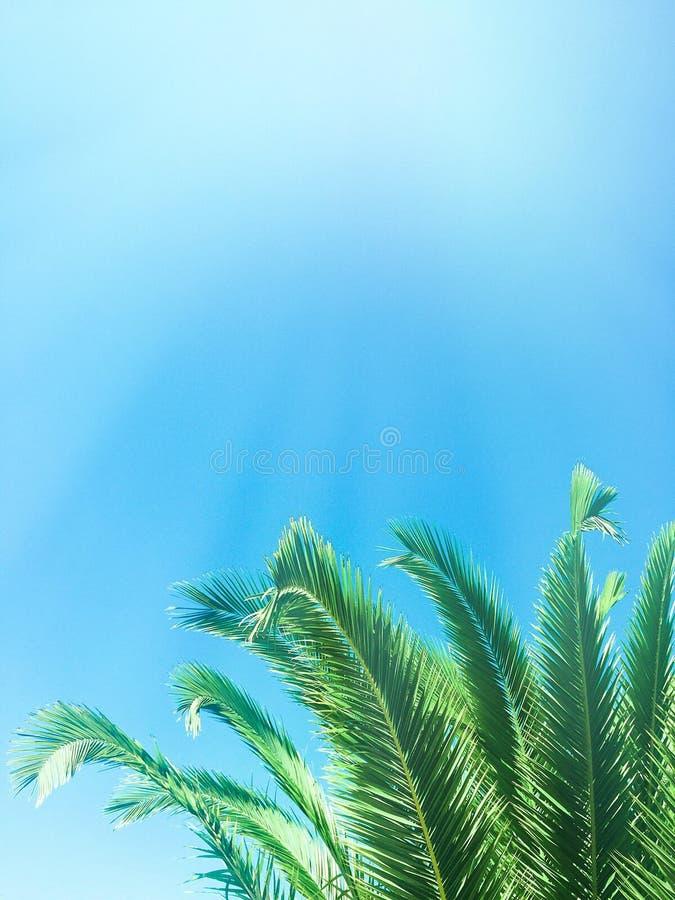 Beaut? des tropiques photographie stock