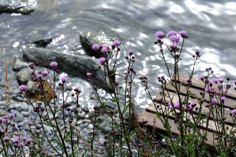 Beautful earth water flower royalty free stock image