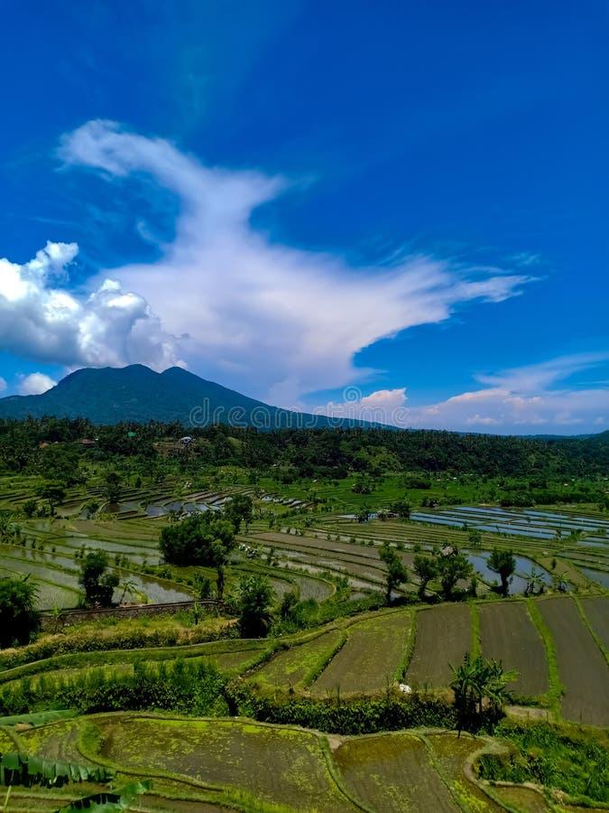 Beautful sikt på risterrasser i den Bali ön arkivbild
