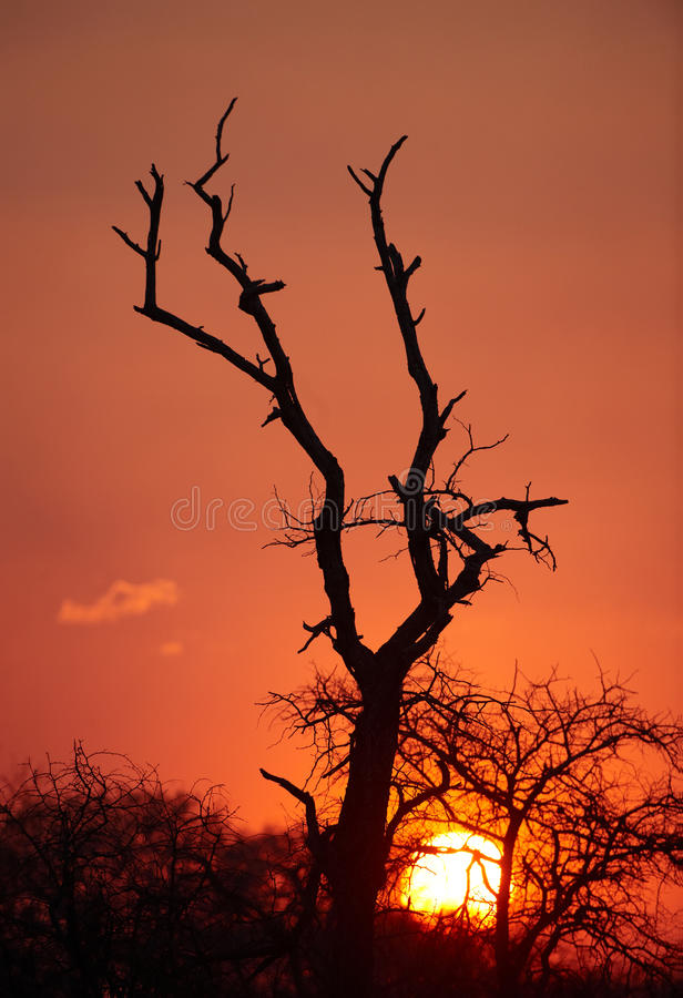 Free Beautful Tree Silhouette At Sunset Stock Image - 13665541