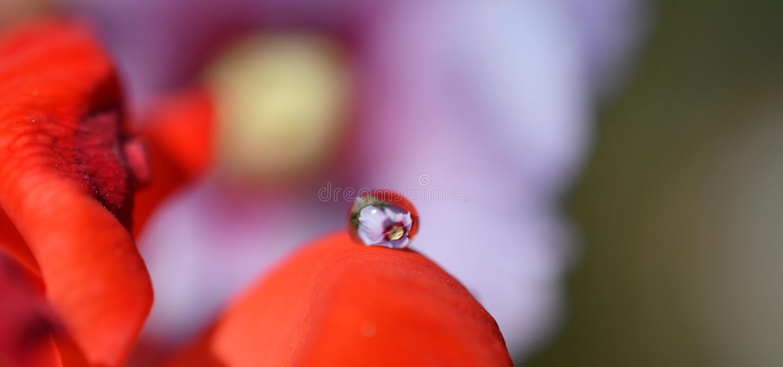 The beauties that a drop of rain contains in itself. And what is reflected by a drop royalty free stock photos