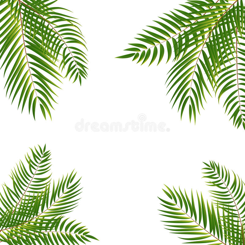 Beautifil棕榈树叶子剪影背景传染媒介Illustrat 库存例证