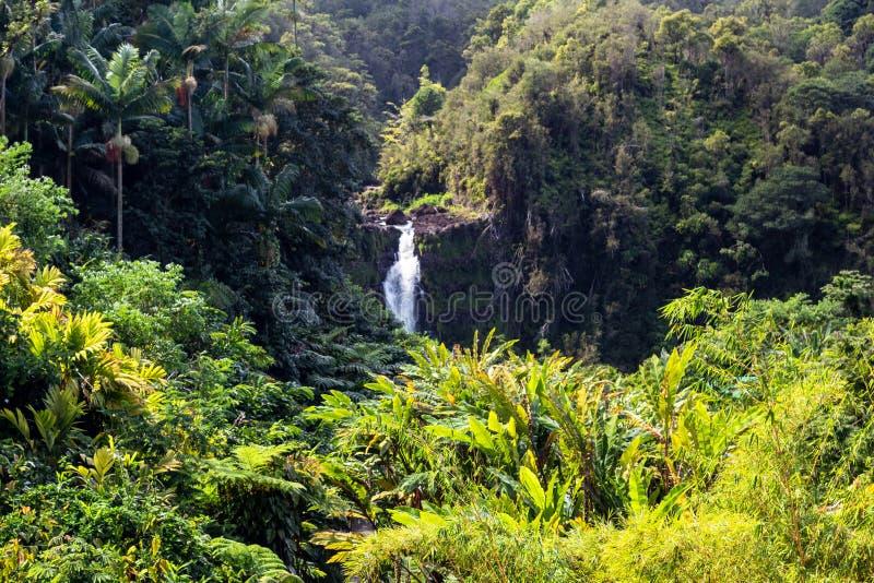 Beautifil Akaka falls near Hilo. Hawaii, United States royalty free stock image
