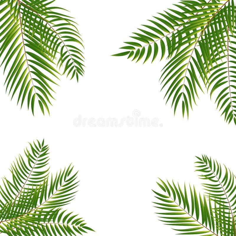 Beautifil drzewka palmowego liścia sylwetki tła wektor Illustrat ilustracji