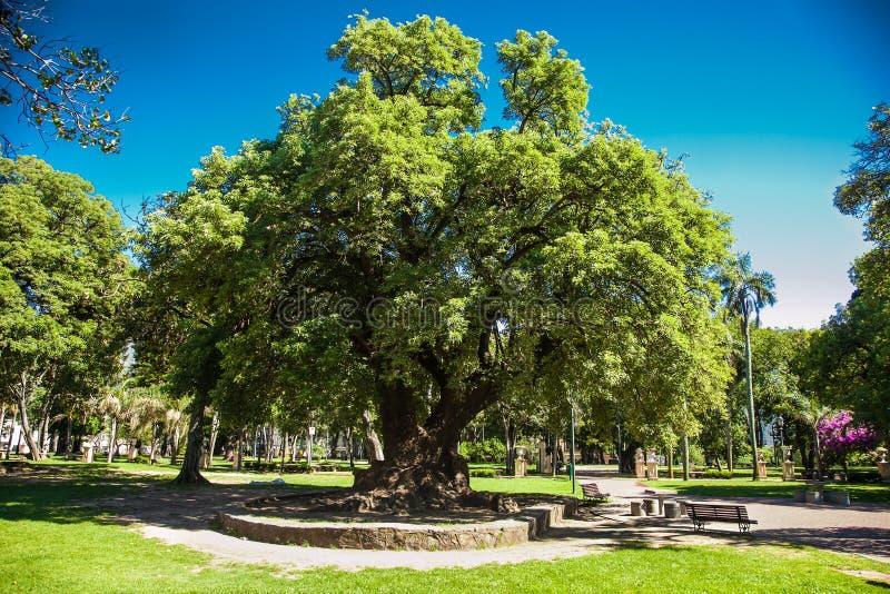 Beautifu gräsplan tre på Lezama parkerar i Bueno Aires royaltyfri bild