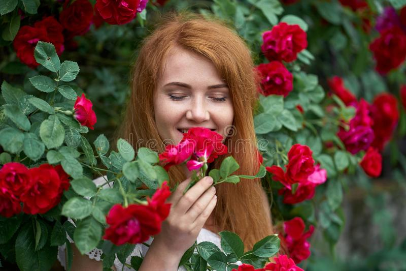 Portrait of a pretty redhead girl dressed in a white light dress on a background of blooming roses. Outdoor. Beautifu happy redhead girl with closed eyes stock photography