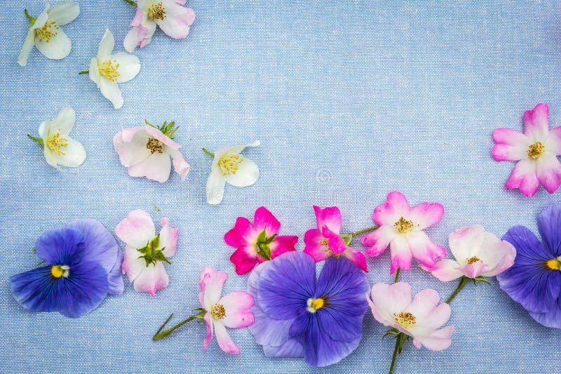 Beautifuil, marco natural con los pensamientos violetas y las rosas rosadas en el azul, tela foto de archivo libre de regalías