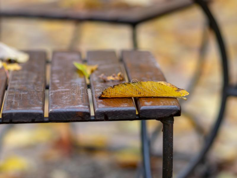 Abstract close-up view with tree leaf on chair, blurred background, blurred foreground stock photos