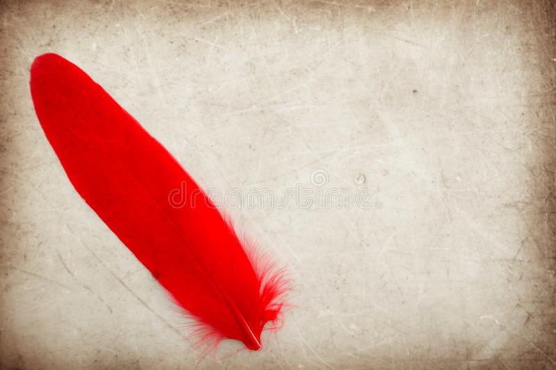 Beautiful abstract color pink and red feather on the brown and white isolated background and wallpaper royalty free stock photo