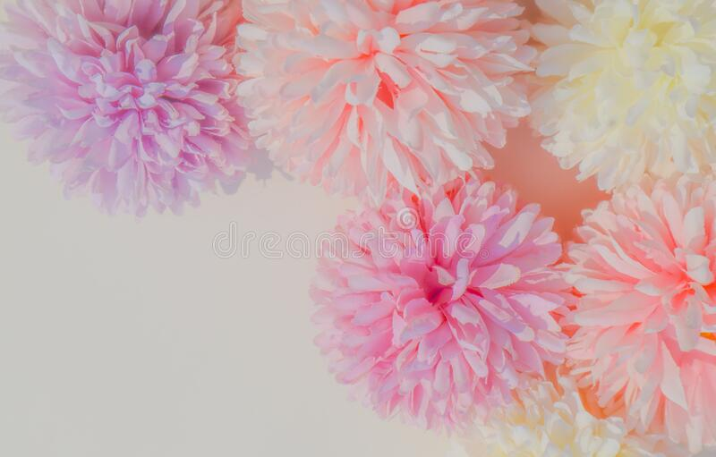 Beautiful abstract color white and pink flowers on white background and white flower frame and pink leaves background texture, flo royalty free stock image