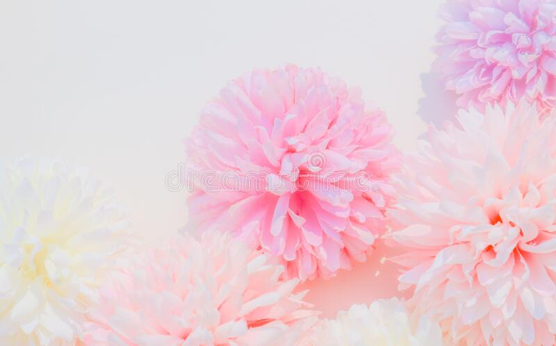 Beautiful abstract color white and pink flowers on white background and white flower frame and pink leaves background texture, flo. Wers banner, pink background stock photography