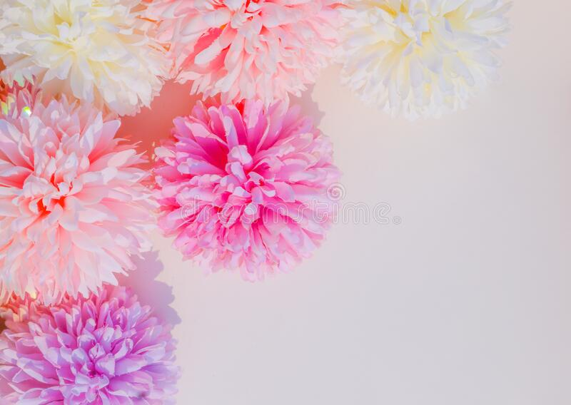 Beautiful abstract color white and pink flowers on white background and white flower frame and pink leaves background texture, flo. Wers banner, pink background royalty free stock photography