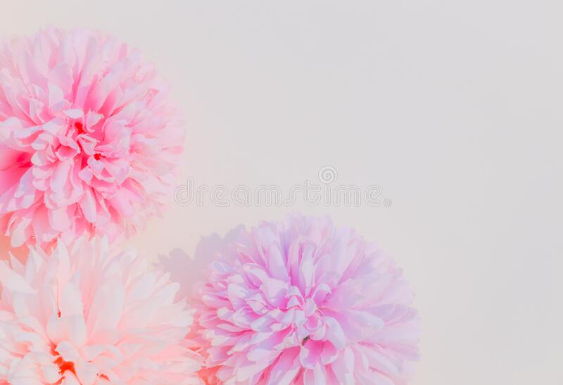 Beautiful abstract color white and pink flowers on white background and white flower frame and pink leaves background texture, flo. Wers banner, pink background stock photos