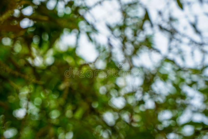 Beautiful abstract scene of defocused fresh natural bright green yellow leaves and white light bokeh background royalty free stock photography