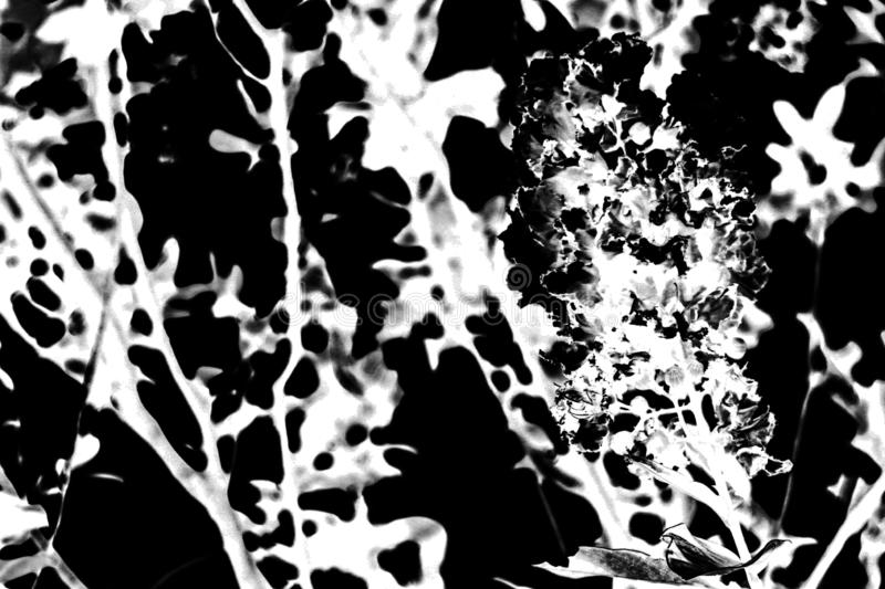 Beautiful abstract texture colorful black and white tree plant forest landscape  on the darkness and background and wallpaper stock photos