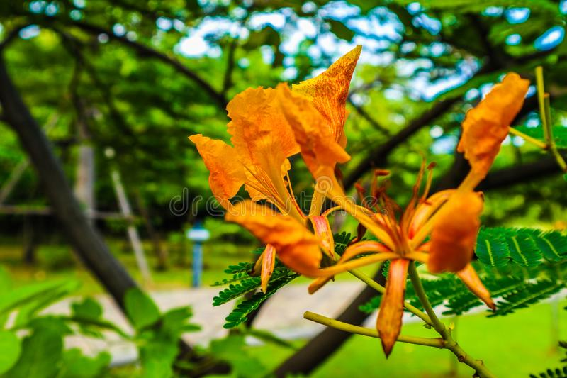Beautiful abstract texture white orange and yellow flowers trees plants and forest lalandscape in the public nature green city par. Beautiful abstract texture royalty free stock photography
