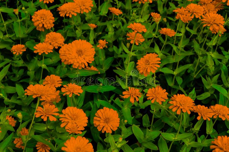 Beautiful abstract texture white orange and yellow flowers trees plants and forest lalandscape in the public nature green city par. Beautiful abstract texture stock photos