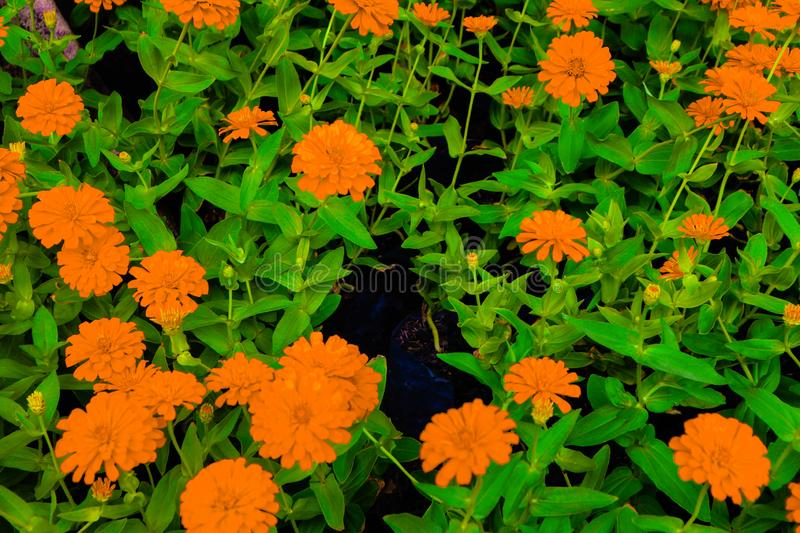Beautiful abstract texture white orange and yellow flowers trees plants and forest lalandscape in the public nature green city par. Beautiful abstract texture royalty free stock image
