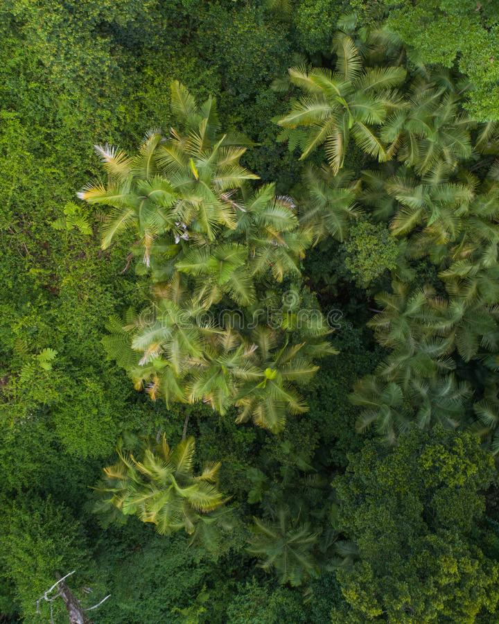 Beautiful aerial scene over a rainforest and small creek. Aerial shot of a jungle and a creek in the morning royalty free stock image