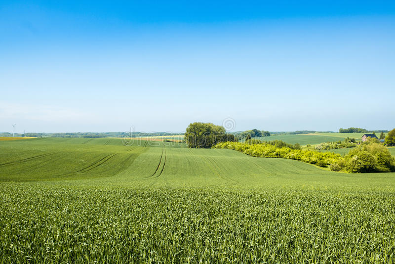 Agrarian fields in spring stock photography
