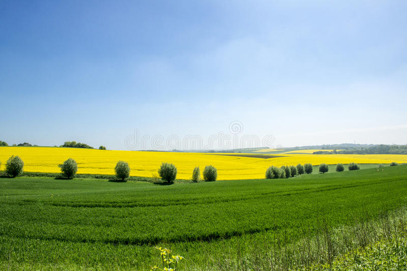 Agrarian fields in spring stock photos