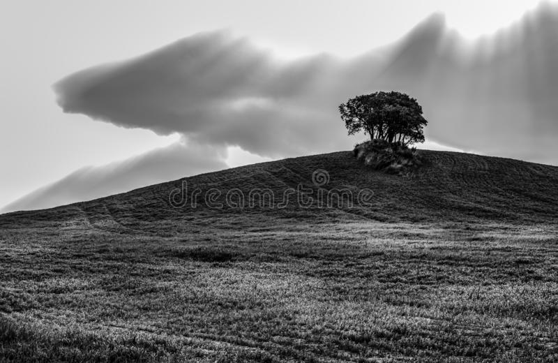 Beautiful agricultural field with the sun, clouds and the one tree on the horizon in black and white. Agricultural field with sun, clouds and the one tree on the stock images