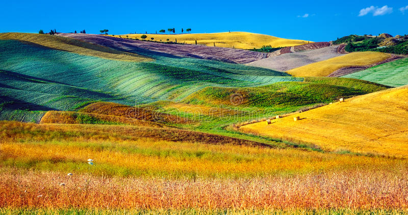 Beautiful agricultural landscape royalty free stock images