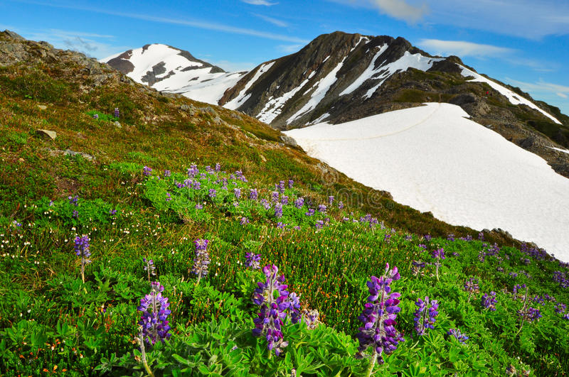 Beautiful Alaskan mountains and landscape in summertime. Mount Roberts, Juneau royalty free stock photos