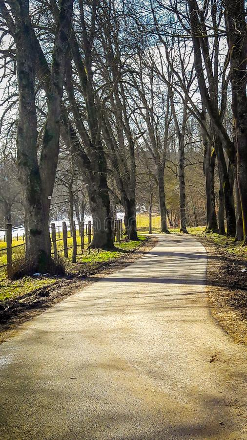 Allee Trees in Rural Germany. A beautiful allee with deciduous trees in central Europe is displayed in this image stock image