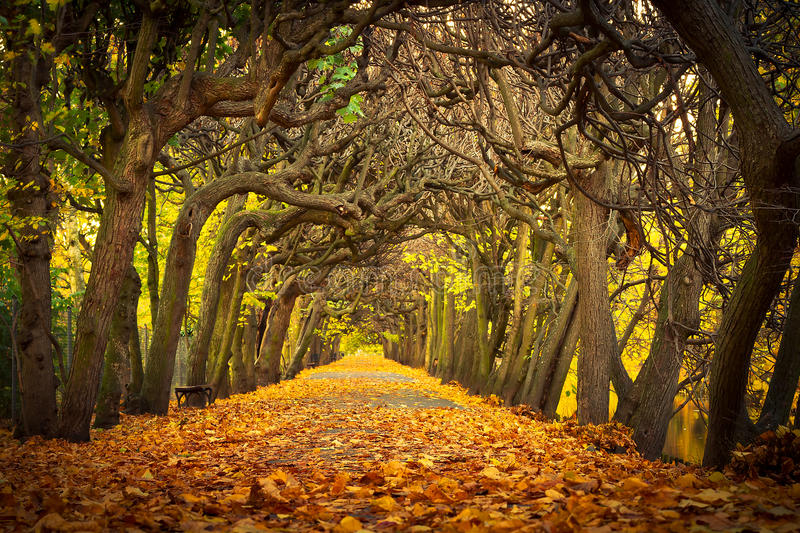 Beautiful alley in the autumnal park stock photo