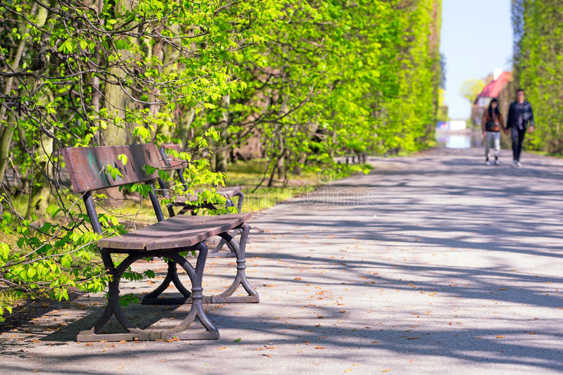 Beautiful Alley With Empty Bench In The Park Stock Photo