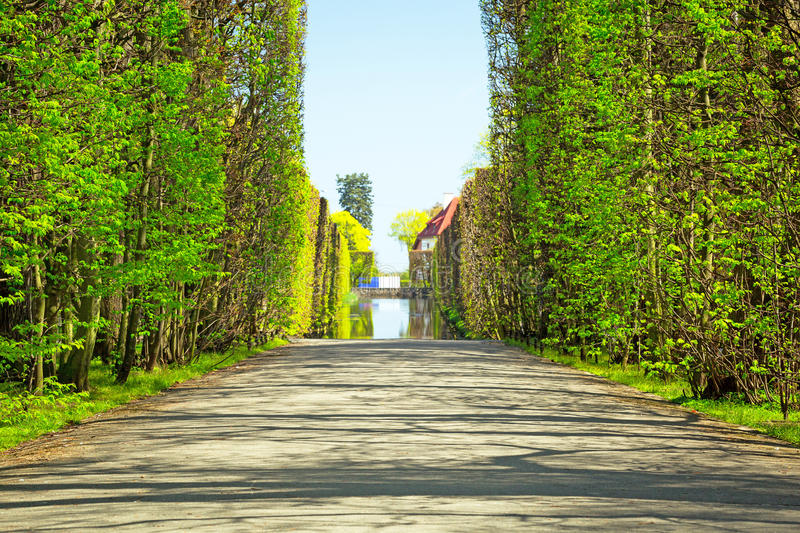 Download Beautiful Alley In The Park Stock Photo - Image: 40375414