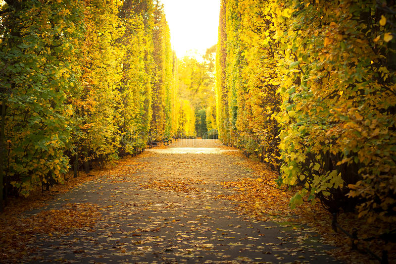 Beautiful alley in the yellow autumnal park stock photos