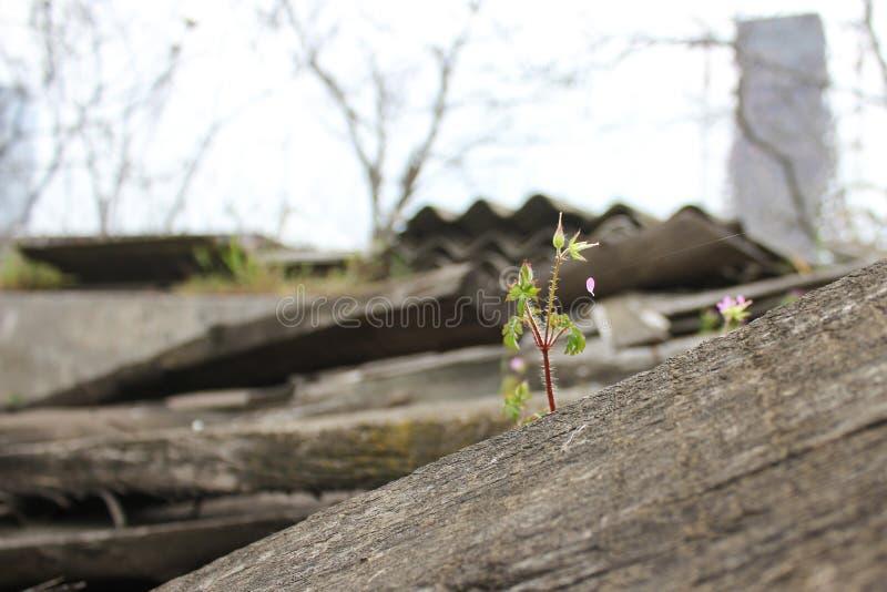 Beautiful alone flower growing on crack street stock photo