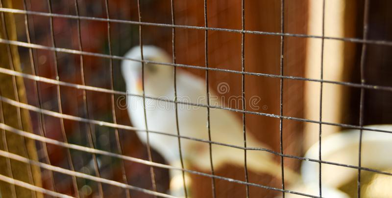 Beautiful Alone White Bird Cage Focused royalty free stock images