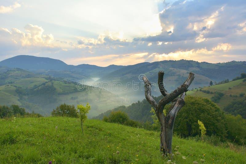 The Beautiful alpine meadow with green grass. sunrise. landscape on wild transylvania hills. Holbav. Romania. Low key, dark backgr. Beautiful alpine meadow with royalty free stock image