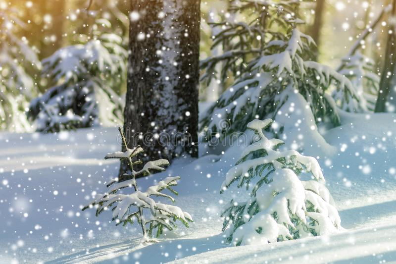 Beautiful amazing Christmas winter mountain landscape. Small you stock images