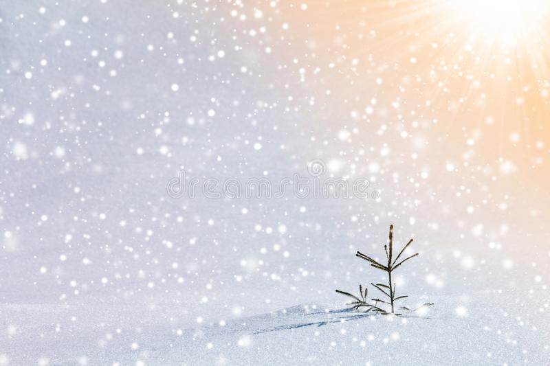 Beautiful amazing Christmas winter mountain landscape. Small young green fir tree spruce growing alone in deep snow on cold sunny stock images