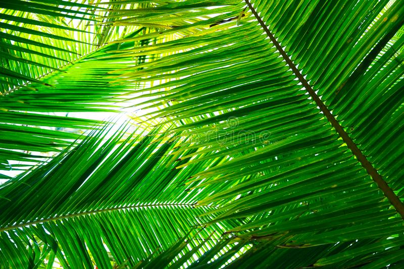 Green flat lay tropical palm leaf branches on white background. royalty free stock photos