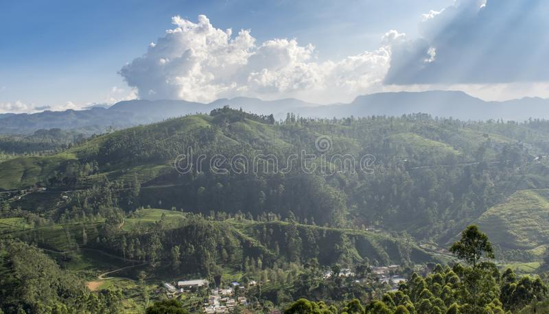 Beautiful amazing landscape of the huge green valley of the tea plantations near the mountains area royalty free stock images