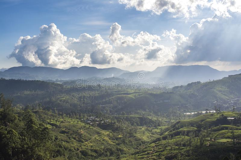 Beautiful amazing landscape of the huge valley of the tea plantations near the mountains area royalty free stock photo
