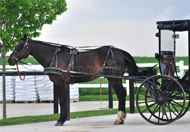 A beautiful Amish horse and buggy. A beautiful Amish horse and buggy parked outside a country store stock photo