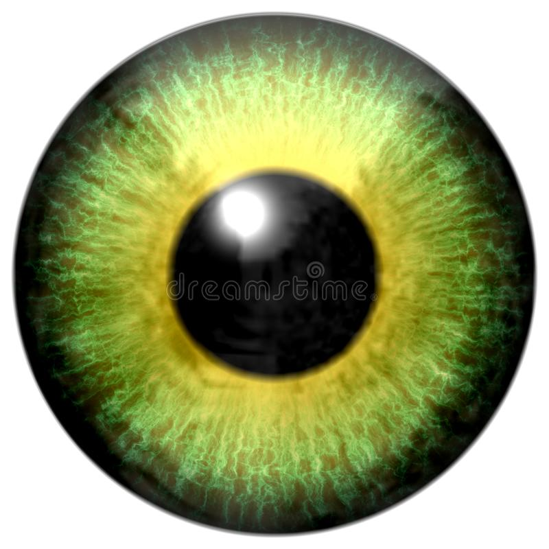 Beautiful animal yellow green predator aligator eyeball. Isolated white background, black pupil, great viewing, 3d eye texture, green yellow round stock illustration