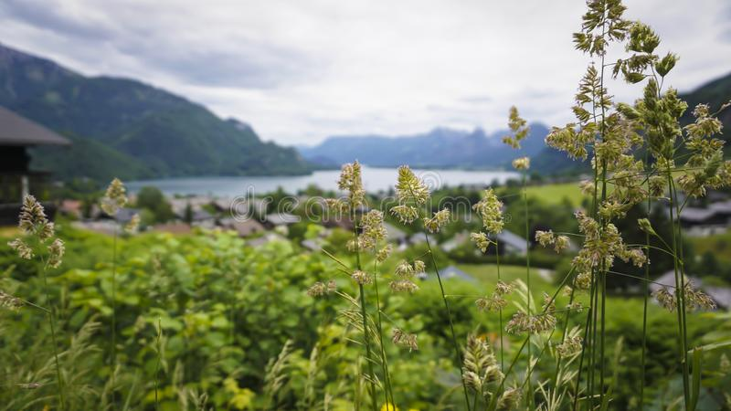 Beautiful Aps landscape with green mountains, valley, cozy hauses. And forest stock photography