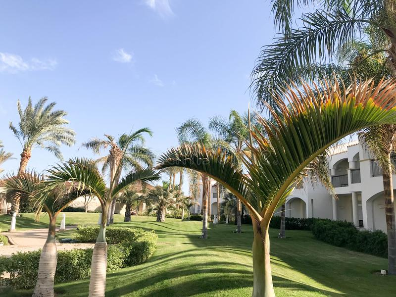 Beautiful Arabian Muslim white stone building, cottages, houses against a background of tropical greens of palm trees with large l royalty free stock photography