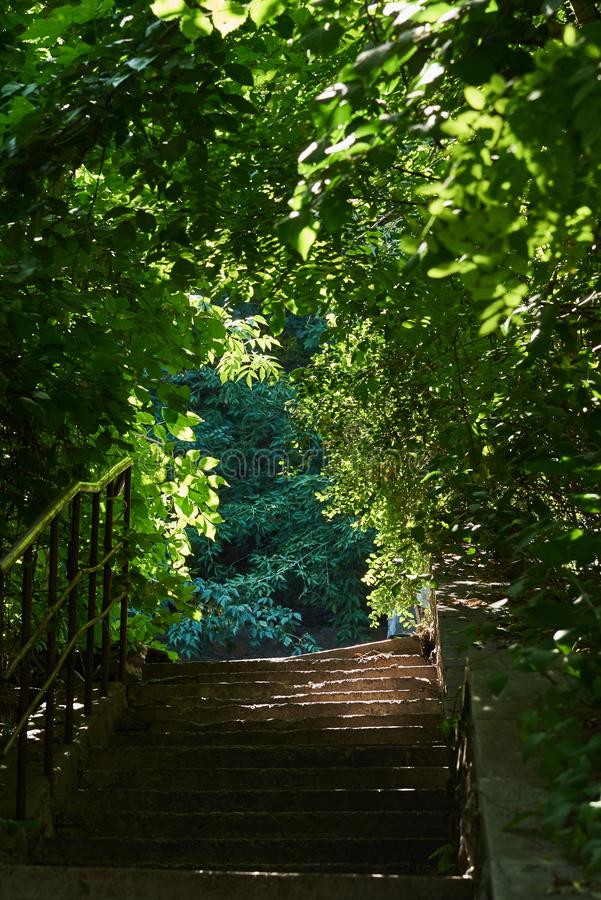Beautiful arch from the vegetation above the stairs in a summer sunny day stock image