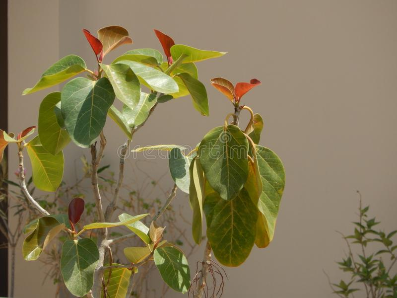 A beautiful Artificial Home Plants  in India royalty free stock photo